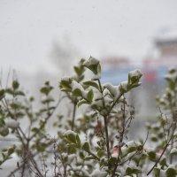 Весенний снег :: юрий Амосов