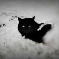 багира :: Светлана Тимченко