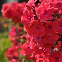 цветочный гламур :: Светлана Тимченко