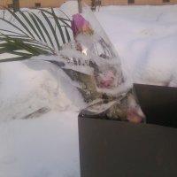 Вас согревают снег и морозы .... :: Натали V