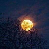 #moon :: Anna Sergeeva