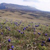 Нижнее плато горы Чатыр-Даг. :: Kонстантин Брагин