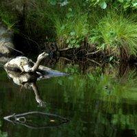 лесной обитатель :: Наталия Зыбайло