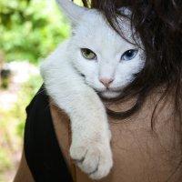 Бездомный кот :: Алексей Баталов