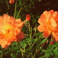 flowers :: Софья Рыбина