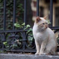 Невозмутимый рыжий кот :: Наталья Шпичка