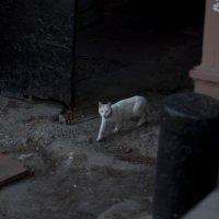 Альбинос :: Наталья Шпичка