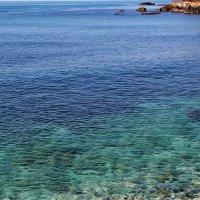 красота морского дна............ :: valeriy g_g