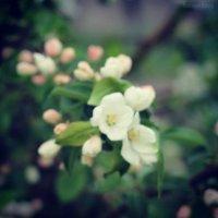 Весна :) :: Victoria Photography