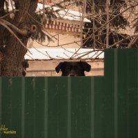Любопытный взгляд собаки! :: Александр Маркин
