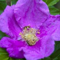 цветок :: юрий мотырев