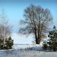 Зимний пейзаж :: Алексей Макшаков