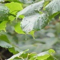 Дождь :: Алексей Mындру