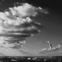 Чувство свободы :: Александра Доможирова