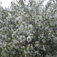 весна красива :: Нестор Махно