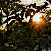 Лучики солнца в закате ... :: Дмитрий Призрак