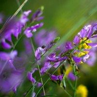 летние травы :: Ирина Лядова