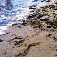 Кусочек пляжа :: Алена