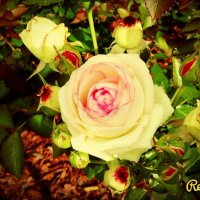 красота :: Наташа Мацко