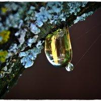 о чем плачут деревья :: Дмитрий Анцыферов