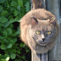 cat :: Виктория Хромова