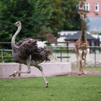Игры животных :: Павел Myth Буканов