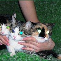 Кошечки :: Зося Lermark