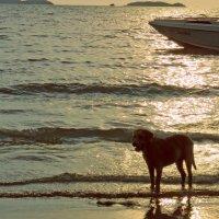 Морская собака :: Наталья Нарсеева