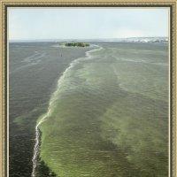 Волга_июльское цветение воды :: Андрей ЕВСЕЕВ