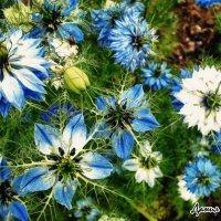 цветок :: Котэ(Данил) Чеширское