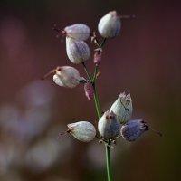 """из серии """"цветы"""" :: Светлана"""