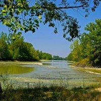 Протока Катуни :: юрий Амосов