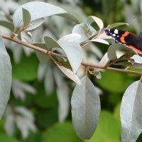 Бабочка и паук :: валерий попов