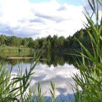 Лесное озеро :: валерий попов