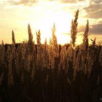 Летний закат :: Дмитрий Тарарин