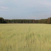 поле :: александр пеньков