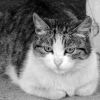 Старый мудрый кот :: Артур Рыжаков