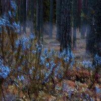 тональность леса.... :: Екатерина Козлова