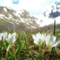 Первоцветы :: Светлана Попова