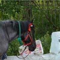 Читающая лошадь :: Дмитрий Марков
