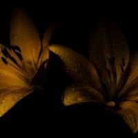 Почти темнота :: Дмитрий Малышев