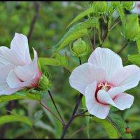 цветочки :: Наташа Мацко