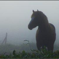 Туманным утром :: Василий Хорошев