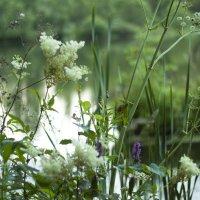 Цветы на берегу :: Екатерина Рябинина
