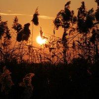 Закат солнца - прекрасное природное явление :: Dasha Kozhalo