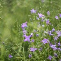 Полевые цветы :: Екатерина Рябинина