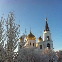 Всё стремится вверх.. :: Светлана Сейбянова