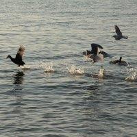 Идущий по воде :: Марта