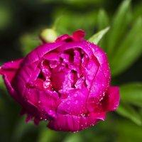 цветы :: Виктория Караваева
