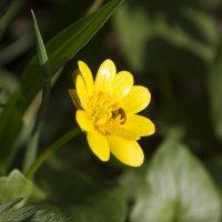 Желтый цветочек и грациозный желтый паучок! :: Анастасия Грек